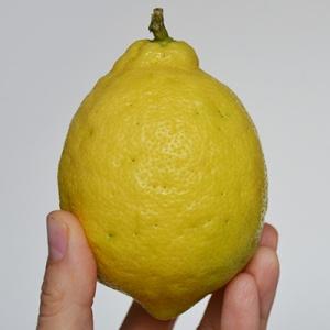 Eat lemons all year: How to make salt preserved lemons