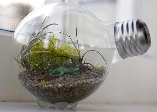 DIY light bulb terrarium tutorial