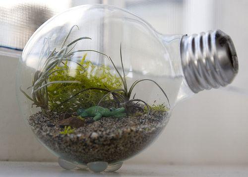 Tutorial: Mini terrario dentro una lampadina