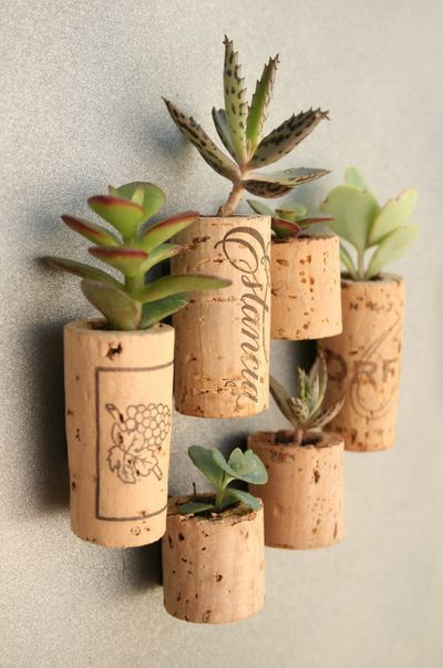 DIY succulent cork magnets