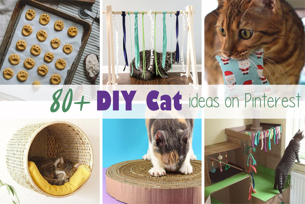 Get all the best handmade ideas for your favorite cats home, food and toys on the DIY Pinterest board!