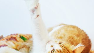 8 Easy Homemade Recycled Cat Toys in under 5 Minutes!